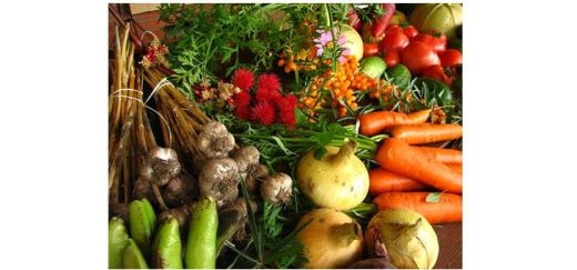 Ecologically grown vegetables - garlic_ cucumbers_ tomatoes_ onions_ carrots_ little orange berries and spikey red things