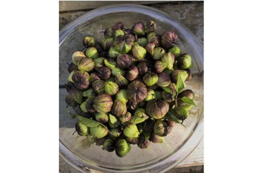 A glass bowl full of small greenish-purple tomatillos