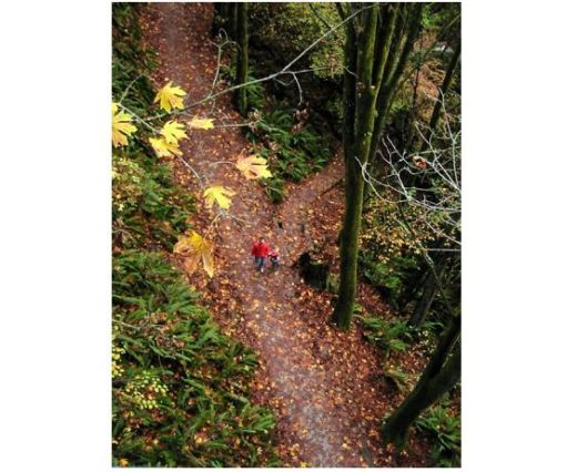 Parent and child walk in Seattle's Ravenna park in the fall