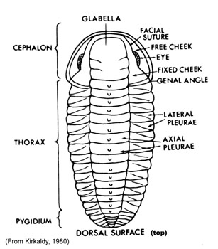 Paleozoic Fossil Quiz Review
