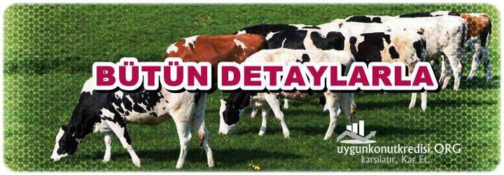 Hayvancılık Kredisi Devlet Destekli (Büyük Baş, Küçük Baş Teşvikleri)