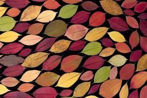Užuolaidų dizainas rudens interjeruose. Kaip paruošti namus rudeniui?
