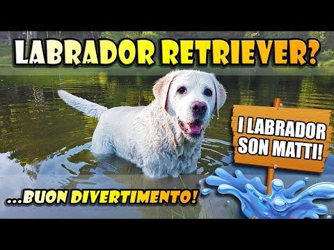 Kira, la nostra LABRADOR RETRIEVER – In giro con questo bellissimo cane!