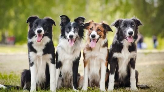 Une famille accueillante pour s'occuper de votre chien pendant les vacances