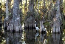 Come e quando visitare l'Everglades National Park