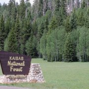 kaibab-national-forest-510×525