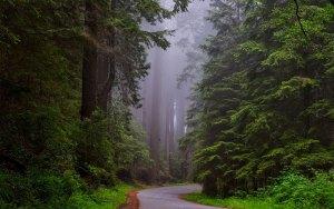 viaggio stati uniti Redwood National Park