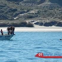 whales-patagonia-05