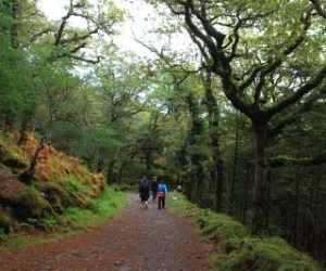 Walking in Killarney