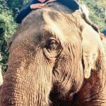 Jennifer Doncsecz in Chiang Rai Thailand