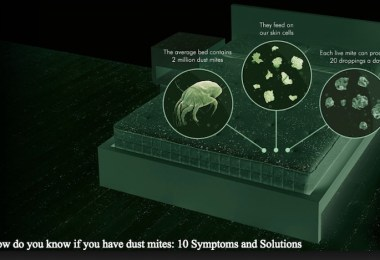 How do you know if you have dust mites: 10 Symptoms and Solutions