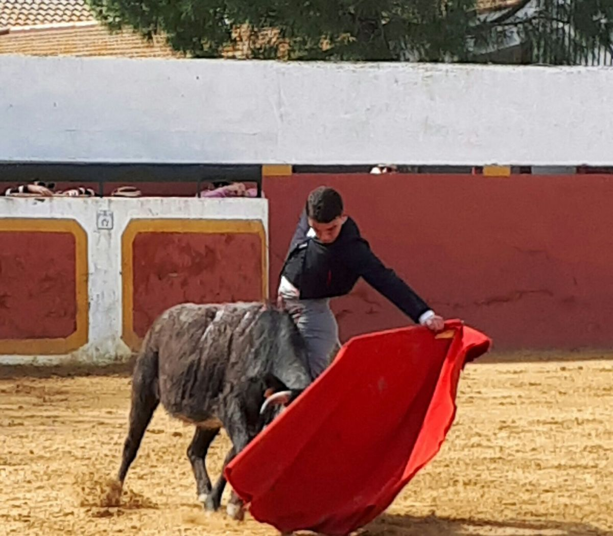 El Club Taurino de Sant Boi celebra la seva tradicional festa campera