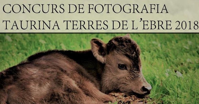 Obert el concurs de fotografia taurina de les Terres de l'Ebre