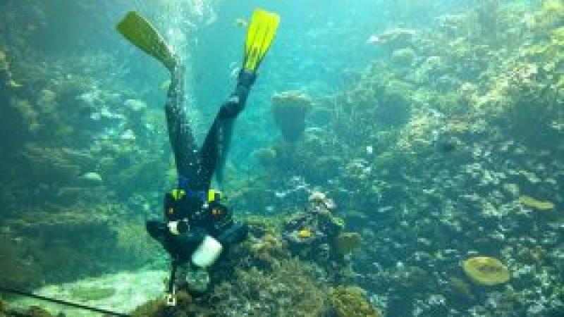 duiker maakt acqarium schoon
