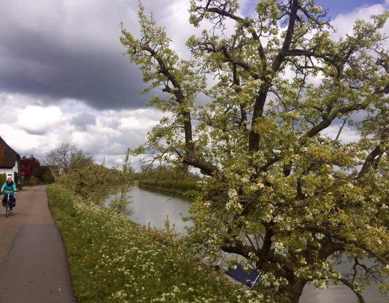 Bloesemroute langs de Linge
