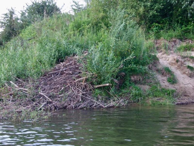 Bever - Excursie - Staatsbosbeheer - Nijmegen - vaders op reis