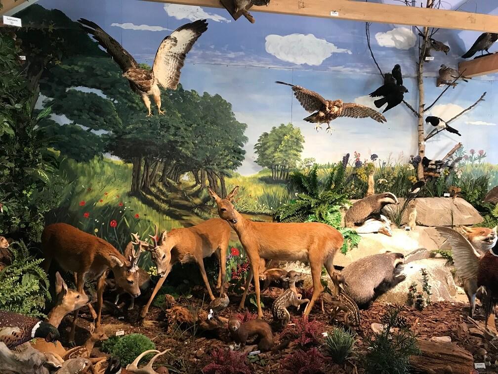 Natuurmuseum Rheezer Marke