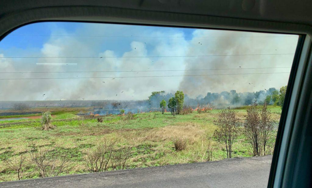 Delen van kakadu staan in brand en de gieren wachten geduldig op ontsnappende prooi