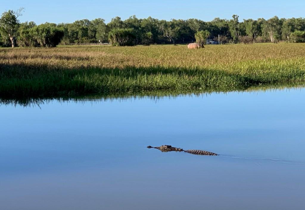 Krokodil die 'oppopt' zodra de zon is opgekomen