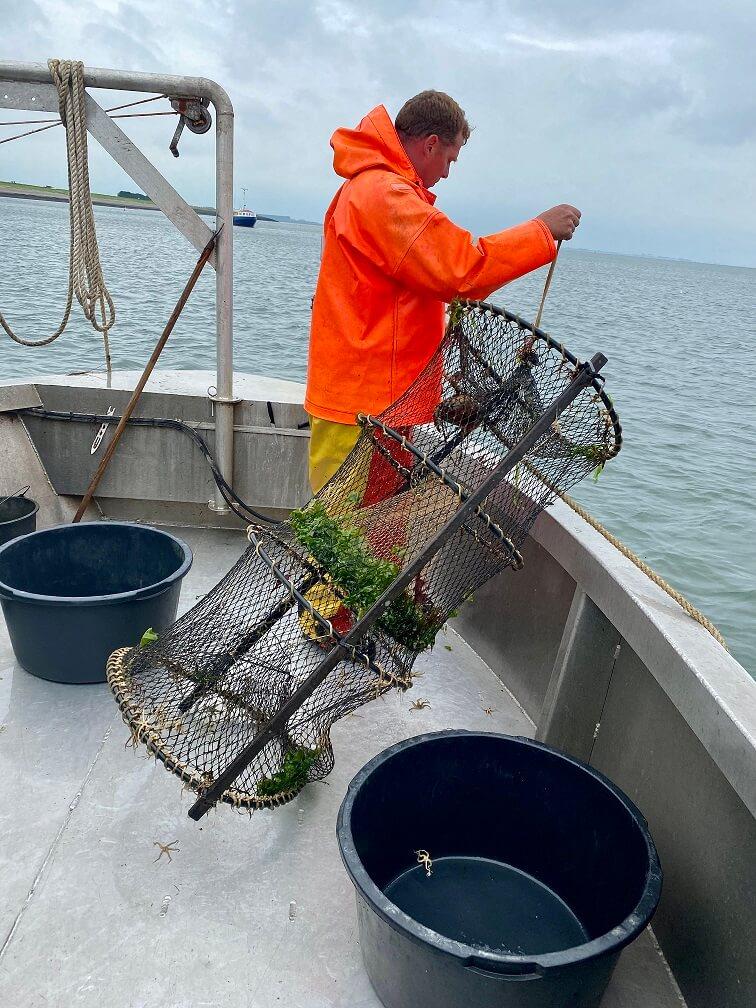 Kreeft vissen op de Oosterschelde