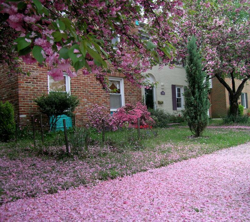Floração em uma casa do hemisfério norte