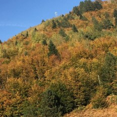 Autunno in Albania, foliage, Voskopoja, Korça