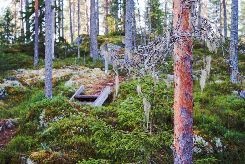 Von Wrightin kulttuuripolku Kuopiossa
