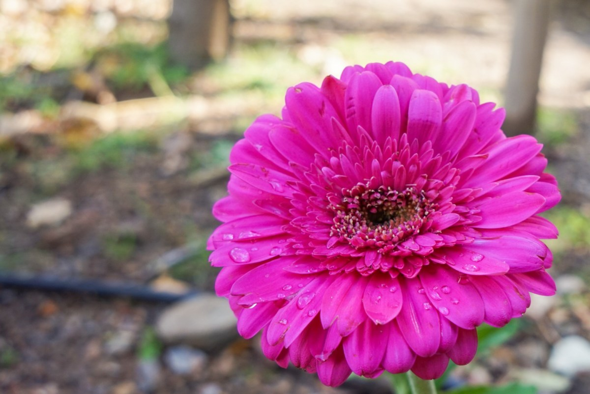 Kreetan Botanical Park & Gardens on hurmaava retkikohde