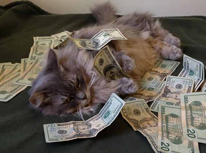 Cat rolling in cash