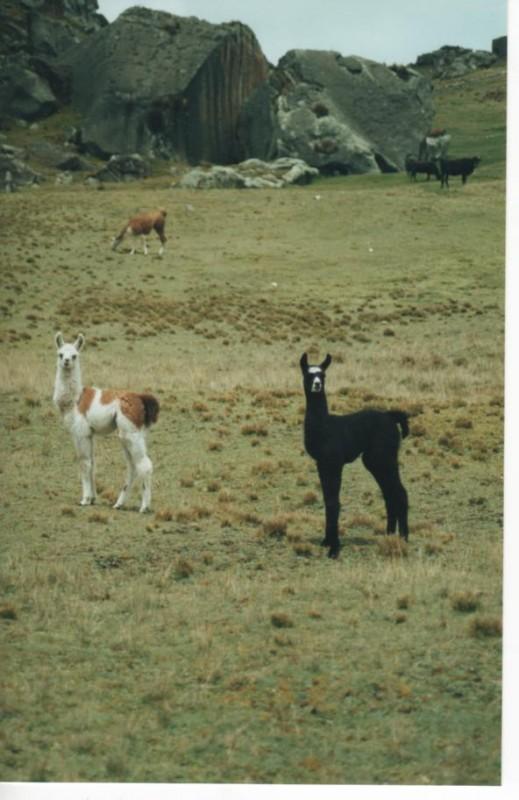 Bosque de Piedras, Peru, 2001