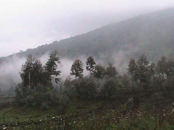 Gorilla trekking park