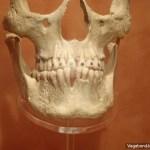 Anthropology Museum Skull