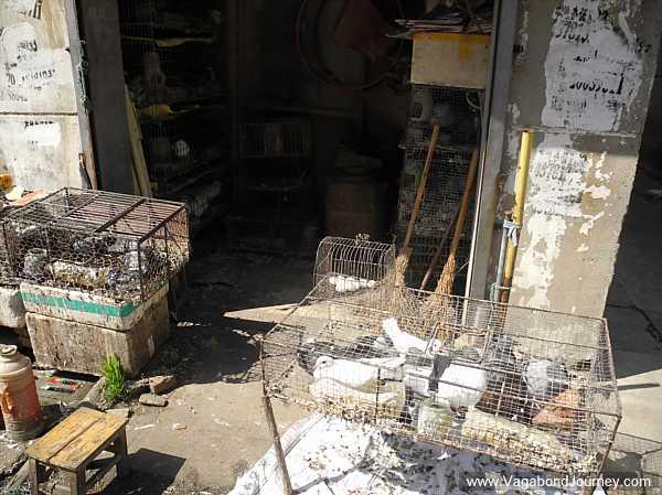 A Chinese bird market