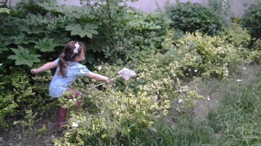 catching-butterflies-in-net
