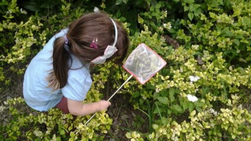 catching-butterflies