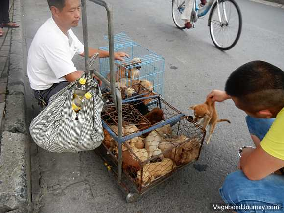 Puppies Packed into Cages Being Sold in the Street