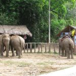 The Karen Tribe still uses Elephants to work their fields
