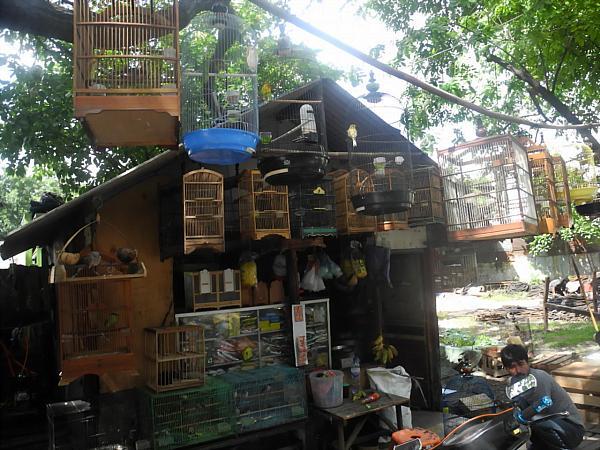 exotic birds Indonesia