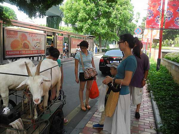 goat farming Chinese city