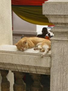 Cat in a temple in Thailand