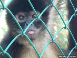 Monkey Cage Mexico
