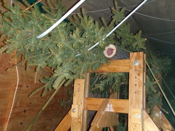 President Obama's Christmas trees