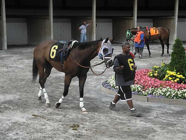 Horses being shown before the race