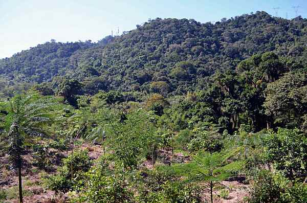 reforest uniao 0091 2_DCE