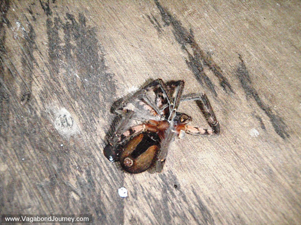 spider eaten by a scorpion