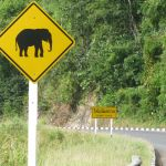 Watch out for Elephants and sharp curves.   Certainly not a sign I see often at home.