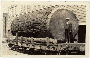 lotass-redwood-38-105l