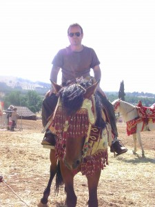 horses in Morocco