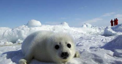 baby seal green travel