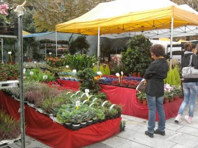 Bergamo flower festival